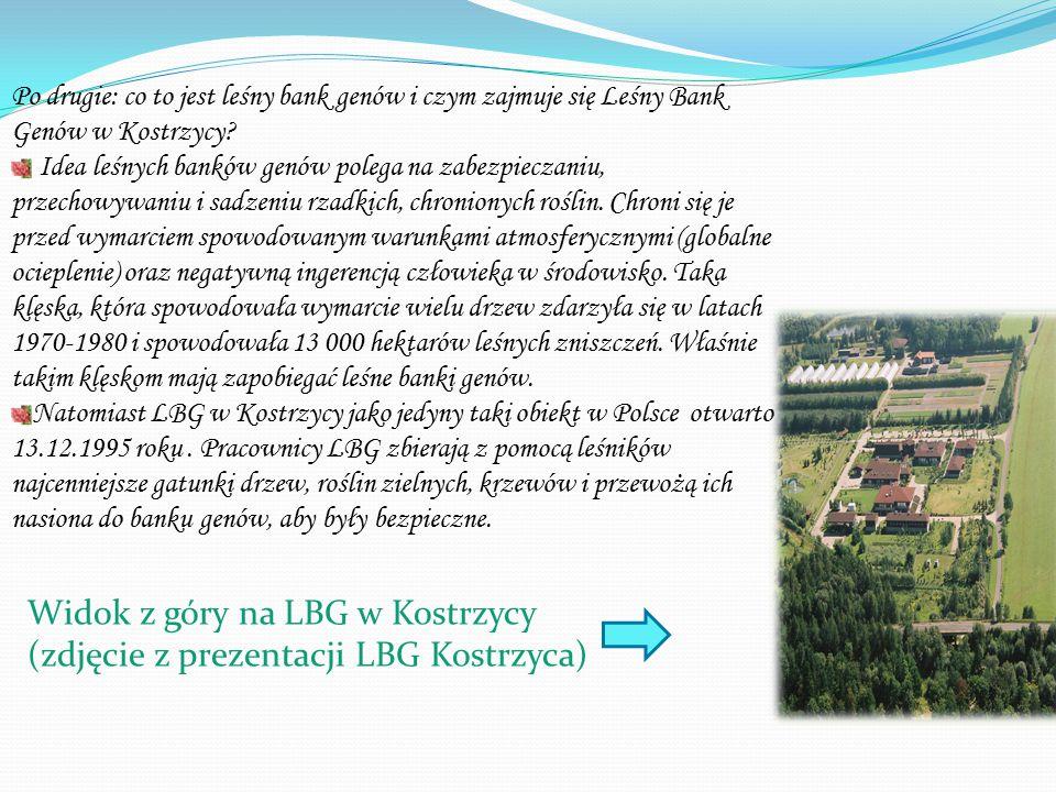 Po drugie: co to jest leśny bank genów i czym zajmuje się Leśny Bank Genów w Kostrzycy.