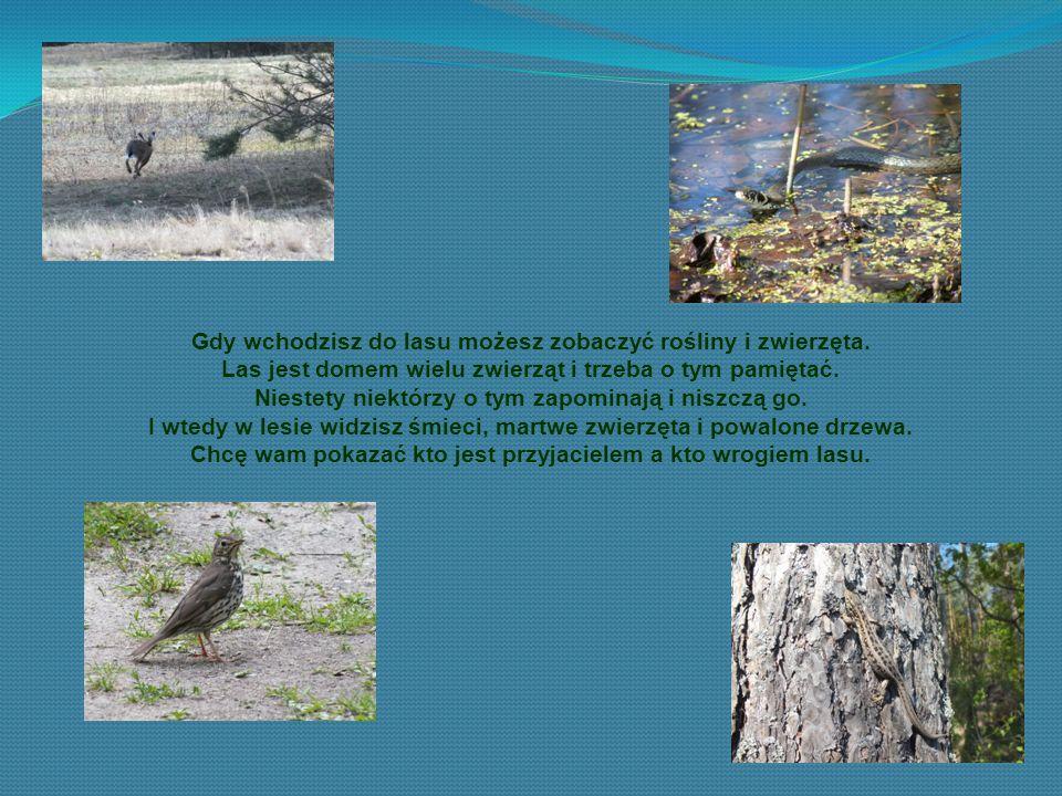 Człowiek też jest przyjacielem lasu.Wielu ludzi chroni go i nigdy nie pozwoli go zniszczyć.