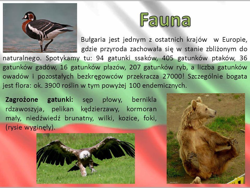 Bułgaria jest jednym z ostatnich krajów w Europie, gdzie przyroda zachowała się w stanie zbliżonym do naturalnego. Spotykamy tu: 94 gatunki ssaków, 40