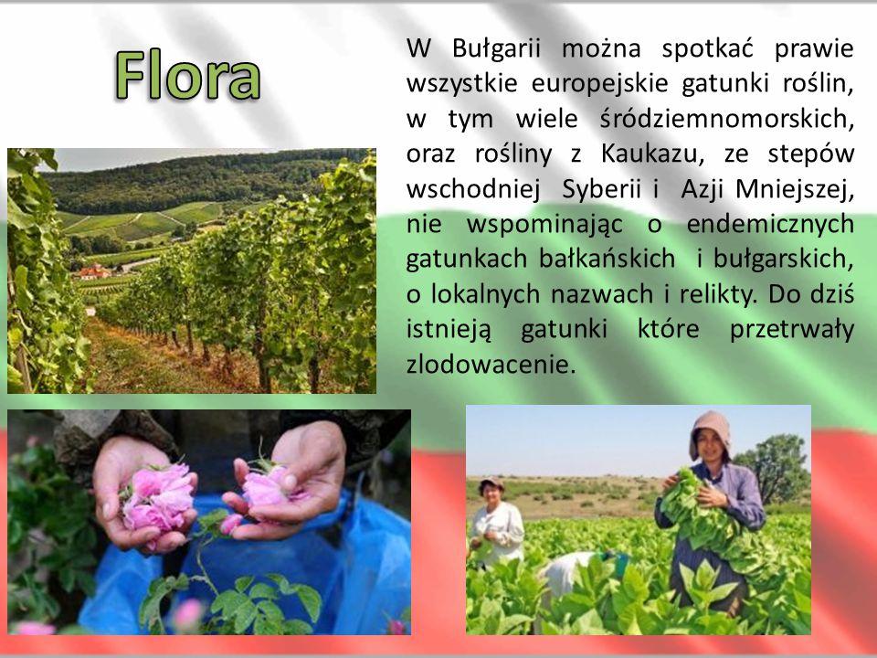 W Bułgarii można spotkać prawie wszystkie europejskie gatunki roślin, w tym wiele śródziemnomorskich, oraz rośliny z Kaukazu, ze stepów wschodniej Syb