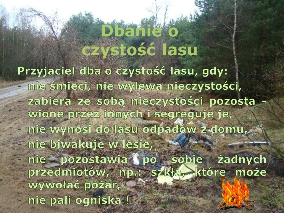 Dbanie o czystość lasu