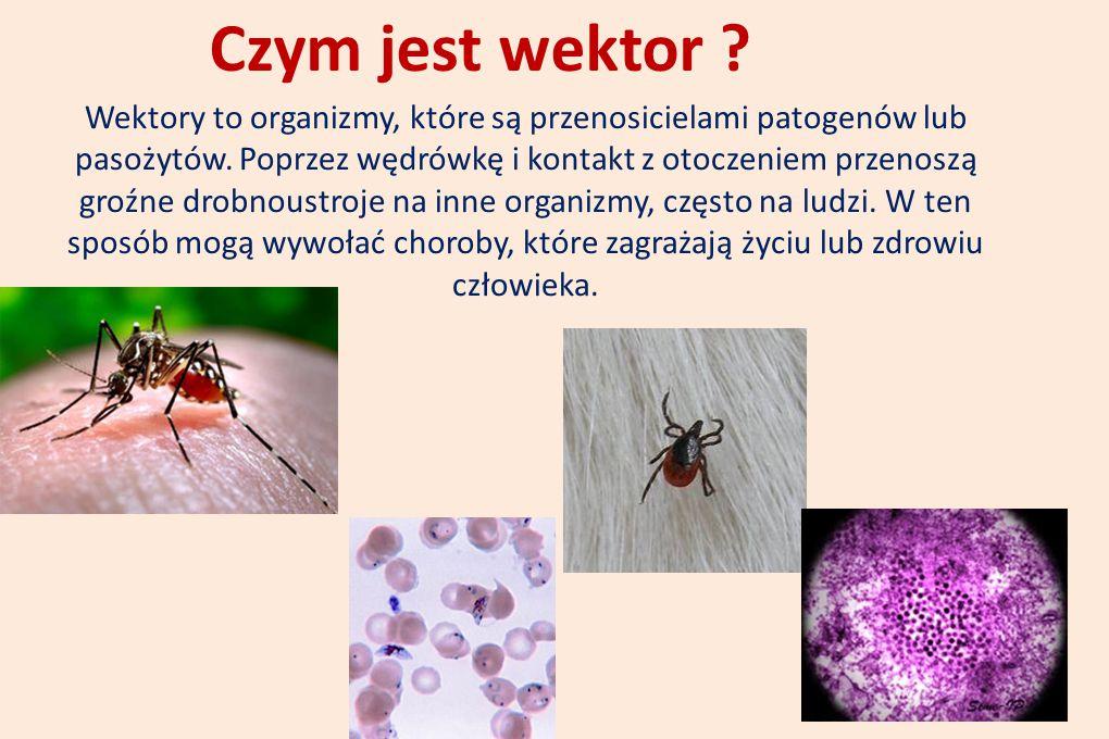 Czym jest wektor ? Wektory to organizmy, które są przenosicielami patogenów lub pasożytów. Poprzez wędrówkę i kontakt z otoczeniem przenoszą groźne dr