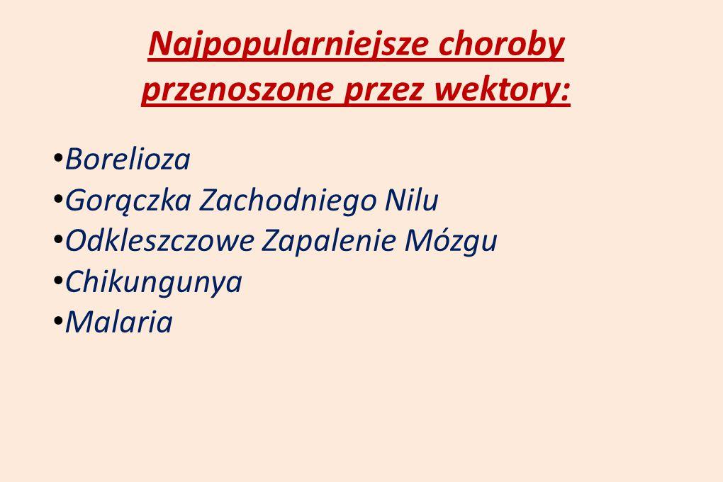 Najpopularniejsze choroby przenoszone przez wektory: Borelioza Gorączka Zachodniego Nilu Odkleszczowe Zapalenie Mózgu Chikungunya Malaria