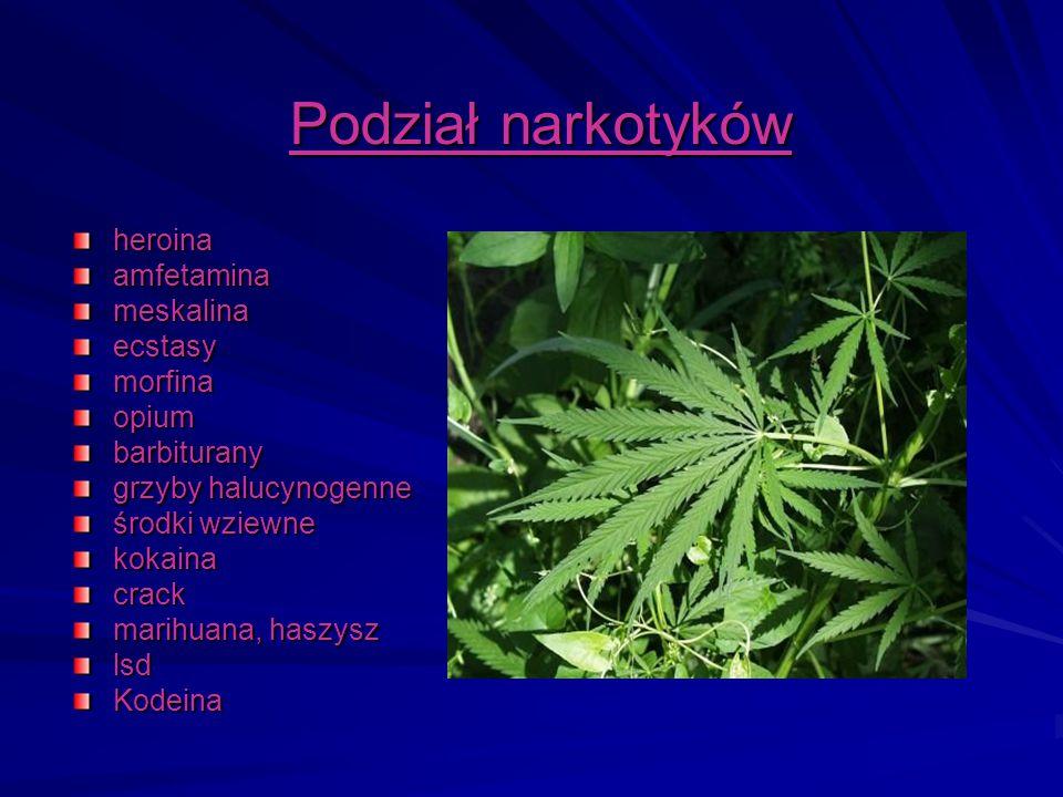 Podział narkotyków heroinaamfetaminameskalinaecstasymorfinaopiumbarbiturany grzyby halucynogenne środki wziewne kokainacrack marihuana, haszysz lsdKod