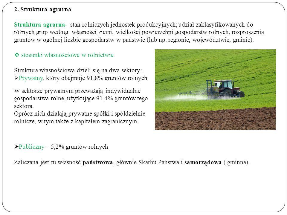 2. Struktura agrarna Struktura agrarna- stan rolniczych jednostek produkcyjnych; udział zaklasyfikowanych do różnych grup według: własności ziemi, wie