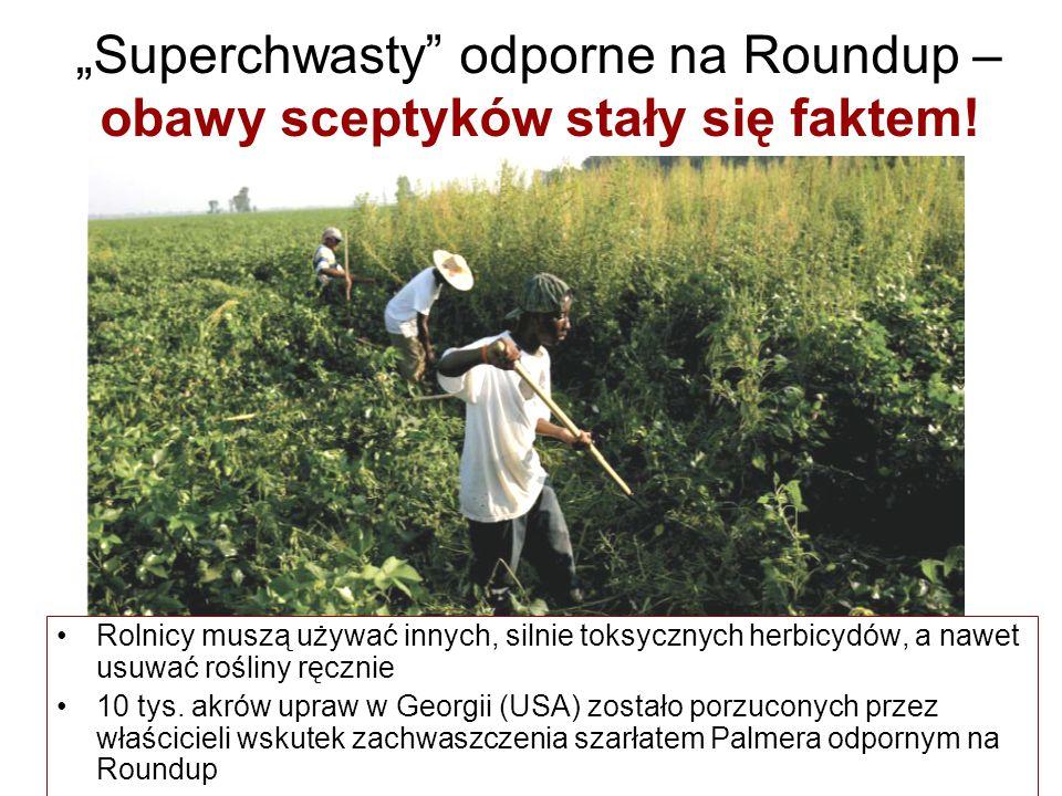 """""""Superchwasty"""" odporne na Roundup – obawy sceptyków stały się faktem! Rolnicy muszą używać innych, silnie toksycznych herbicydów, a nawet usuwać rośli"""