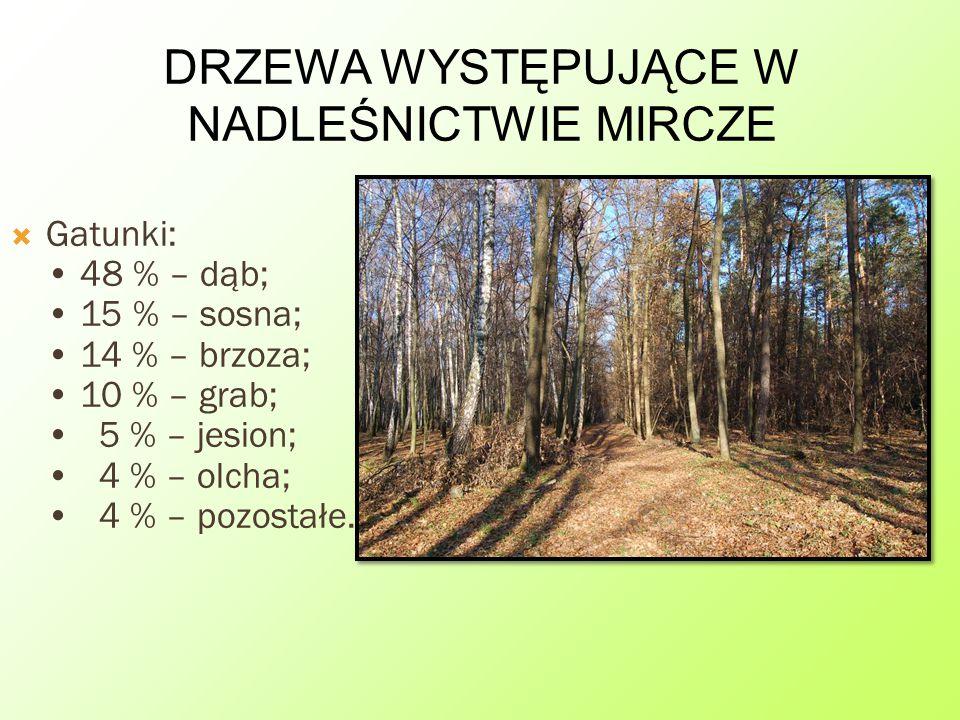 DRZEWA WYSTĘPUJĄCE W NADLEŚNICTWIE MIRCZE GGatunki: 48 % – dąb; 15 % – sosna; 14 % – brzoza; 10 % – grab; 5 % – jesion; 4 % – olcha; 4 % – pozostałe