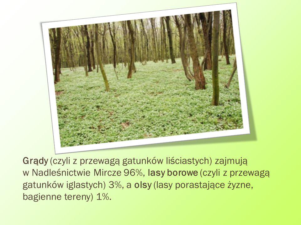 Grądy (czyli z przewagą gatunków liściastych) zajmują w Nadleśnictwie Mircze 96%, lasy borowe (czyli z przewagą gatunków iglastych) 3%, a olsy (lasy p