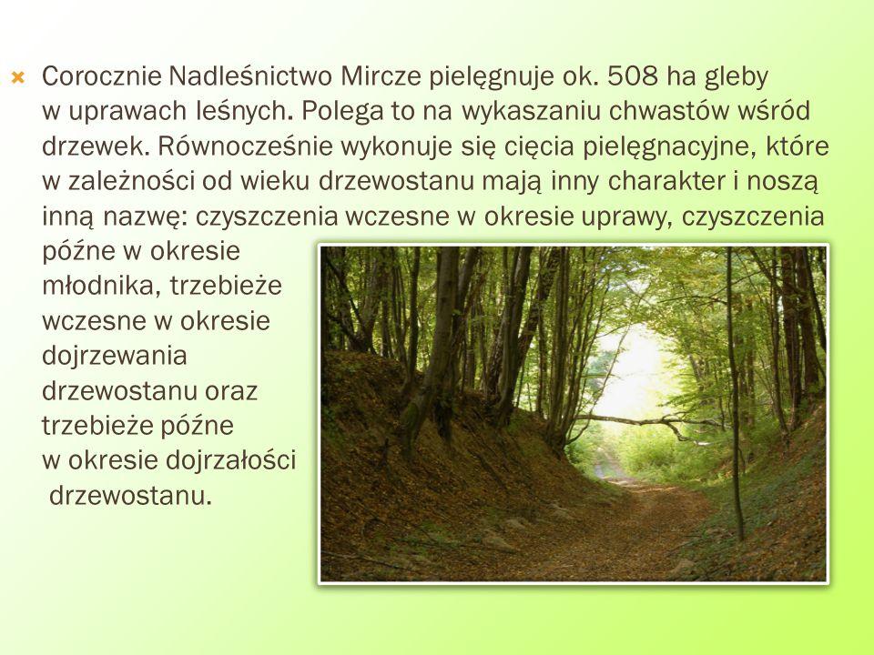  Corocznie Nadleśnictwo Mircze pielęgnuje ok. 508 ha gleby w uprawach leśnych. Polega to na wykaszaniu chwastów wśród drzewek. Równocześnie wykonuje