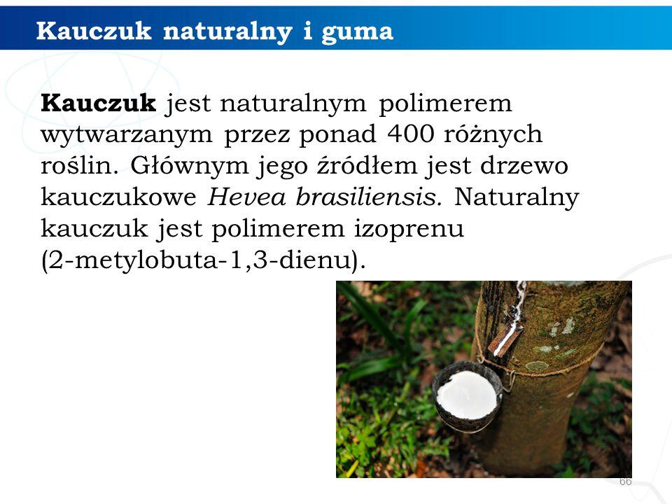 Kauczuk naturalny i guma Kauczuk jest naturalnym polimerem wytwarzanym przez ponad 400 różnych roślin. Głównym jego źródłem jest drzewo kauczukowe Hev