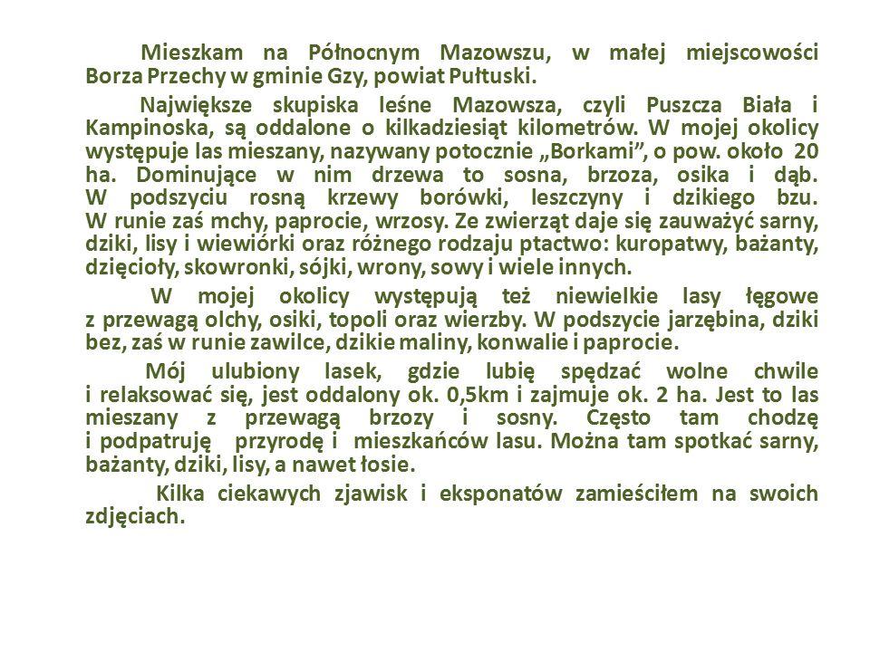 Mieszkam na Północnym Mazowszu, w małej miejscowości Borza Przechy w gminie Gzy, powiat Pułtuski. Największe skupiska leśne Mazowsza, czyli Puszcza Bi