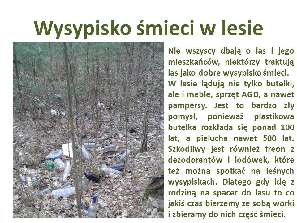 Wysypisko śmieci w lesie Nie wszyscy dbają o las i jego mieszkańców, niektórzy traktują las jako dobre wysypisko śmieci. W lesie lądują nie tylko bute