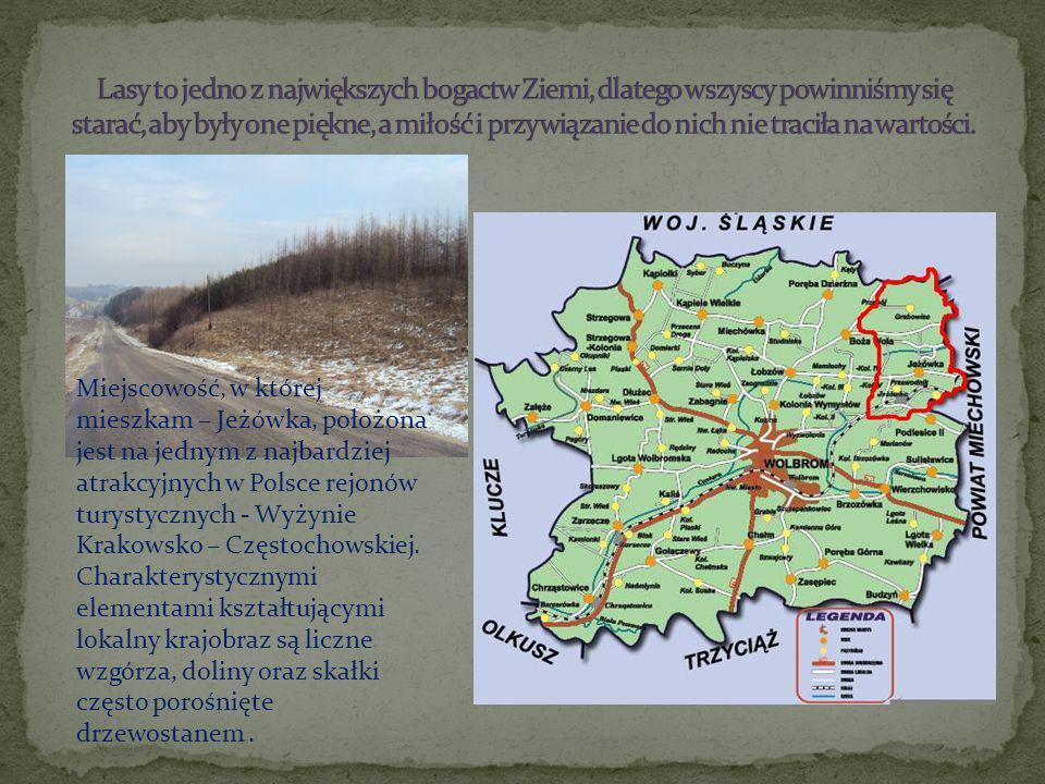 Miejscowość, w której mieszkam – Jeżówka, położona jest na jednym z najbardziej atrakcyjnych w Polsce rejonów turystycznych - Wyżynie Krakowsko – Częstochowskiej.