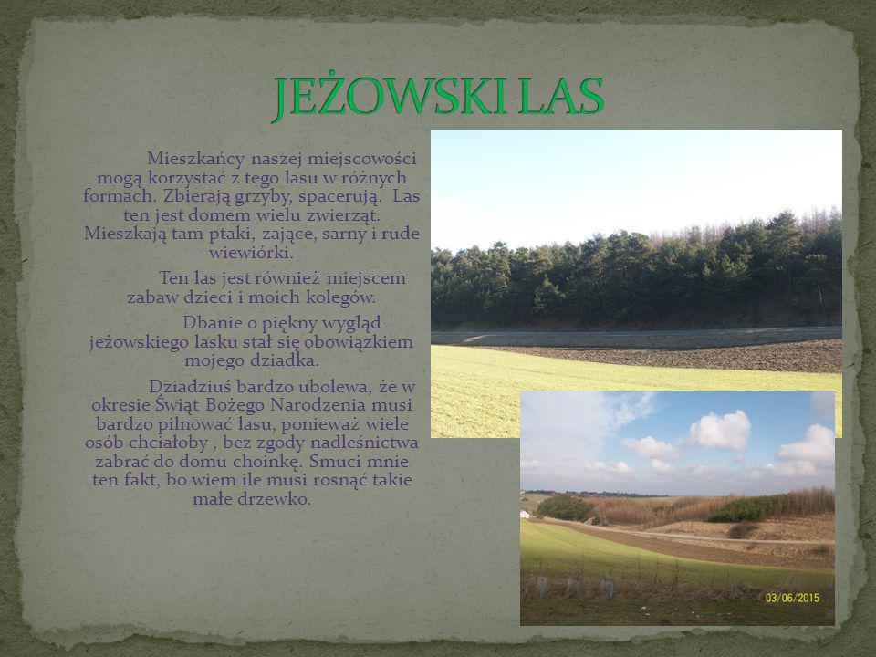 Mieszkańcy naszej miejscowości mogą korzystać z tego lasu w różnych formach.