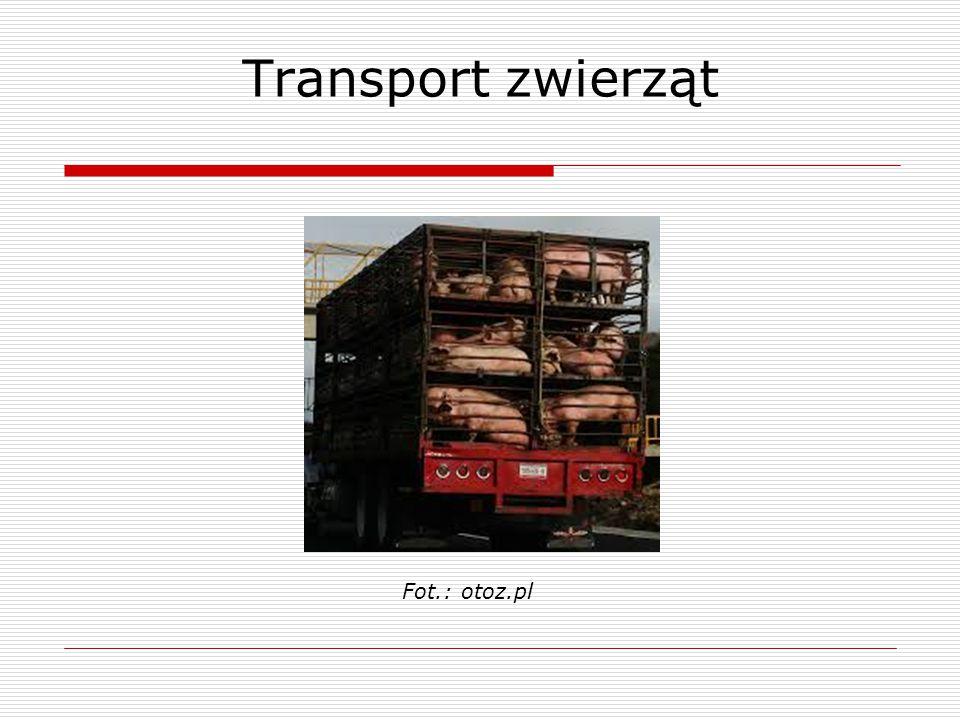 Transport zwierząt Fot.: otoz.pl