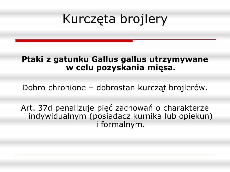 Kurczęta brojlery Ptaki z gatunku Gallus gallus utrzymywane w celu pozyskania mięsa. Dobro chronione – dobrostan kurcząt brojlerów. Art. 37d penalizuj