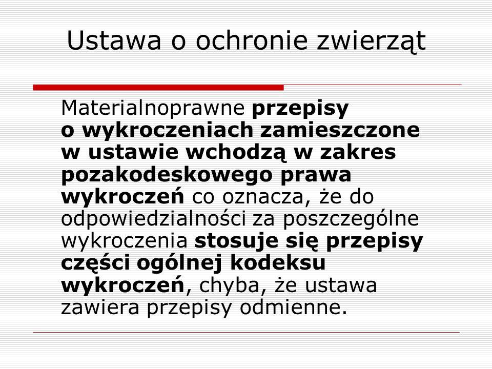 Kurczęta brojlery Fot.: otwarteklatki.pl