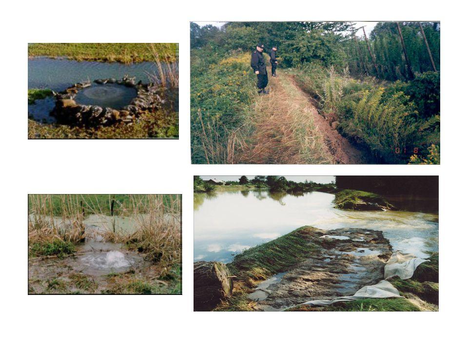 Działania ratownictwa wodnego na terenach objętych powodzią Zagadnienia: Ewakuacja osób i zwierząt z terenów objętych powodzią.