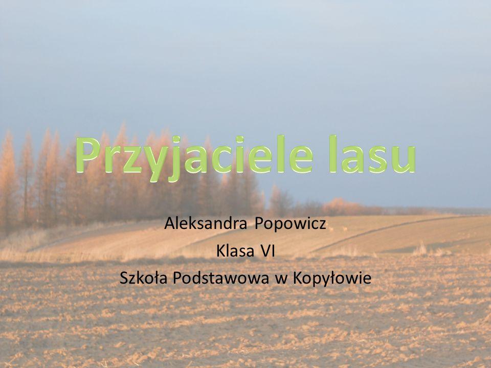 Aleksandra Popowicz Klasa VI Szkoła Podstawowa w Kopyłowie