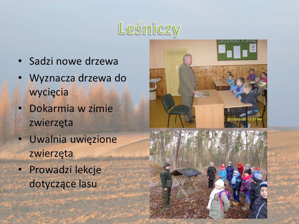 Sadzi nowe drzewa Wyznacza drzewa do wycięcia Dokarmia w zimie zwierzęta Uwalnia uwięzione zwierzęta Prowadzi lekcje dotyczące lasu