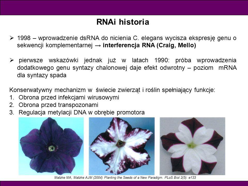 RNAi historia  1998 – wprowadzenie dsRNA do nicienia C.