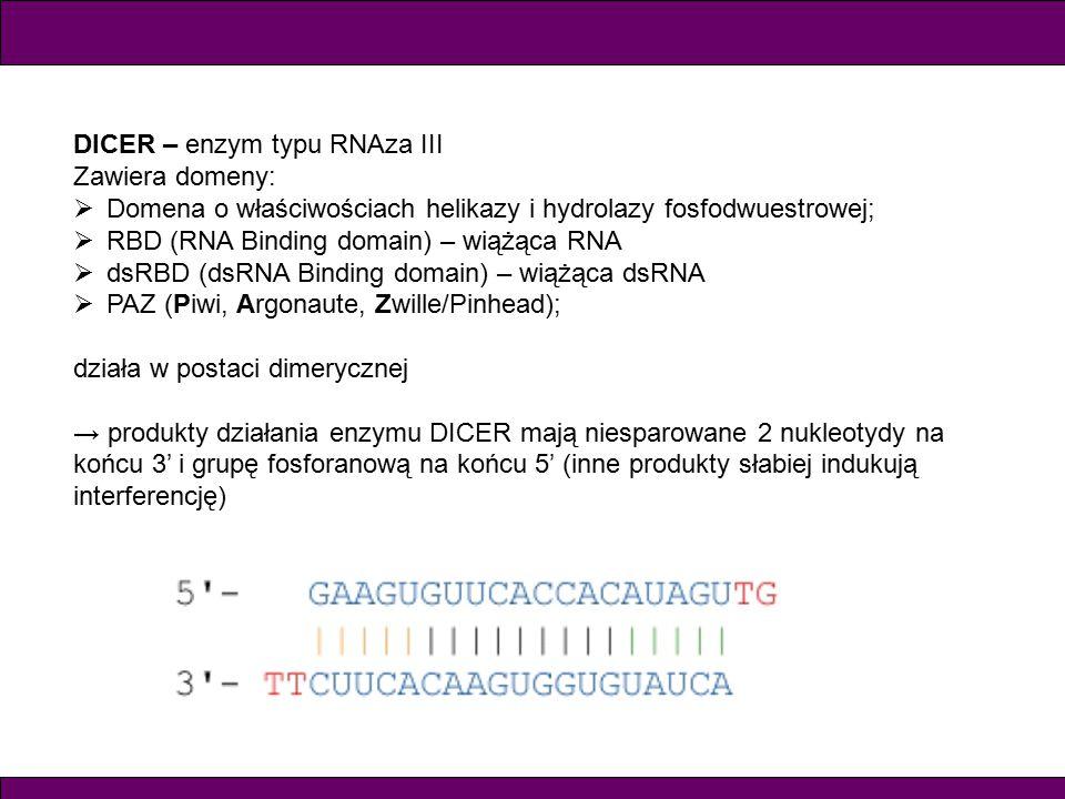 DICER – enzym typu RNAza III Zawiera domeny:  Domena o właściwościach helikazy i hydrolazy fosfodwuestrowej;  RBD (RNA Binding domain) – wiążąca RNA  dsRBD (dsRNA Binding domain) – wiążąca dsRNA  PAZ (Piwi, Argonaute, Zwille/Pinhead); działa w postaci dimerycznej → produkty działania enzymu DICER mają niesparowane 2 nukleotydy na końcu 3' i grupę fosforanową na końcu 5' (inne produkty słabiej indukują interferencję)