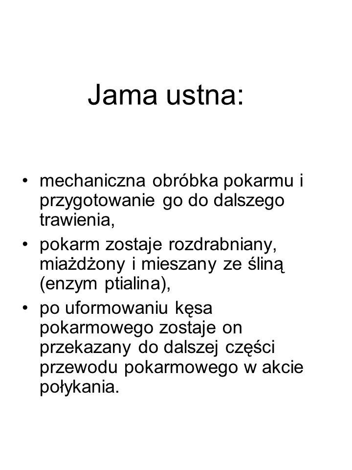 Otrzewna Gładka cienka błona surowicza Wyściela ściany j.