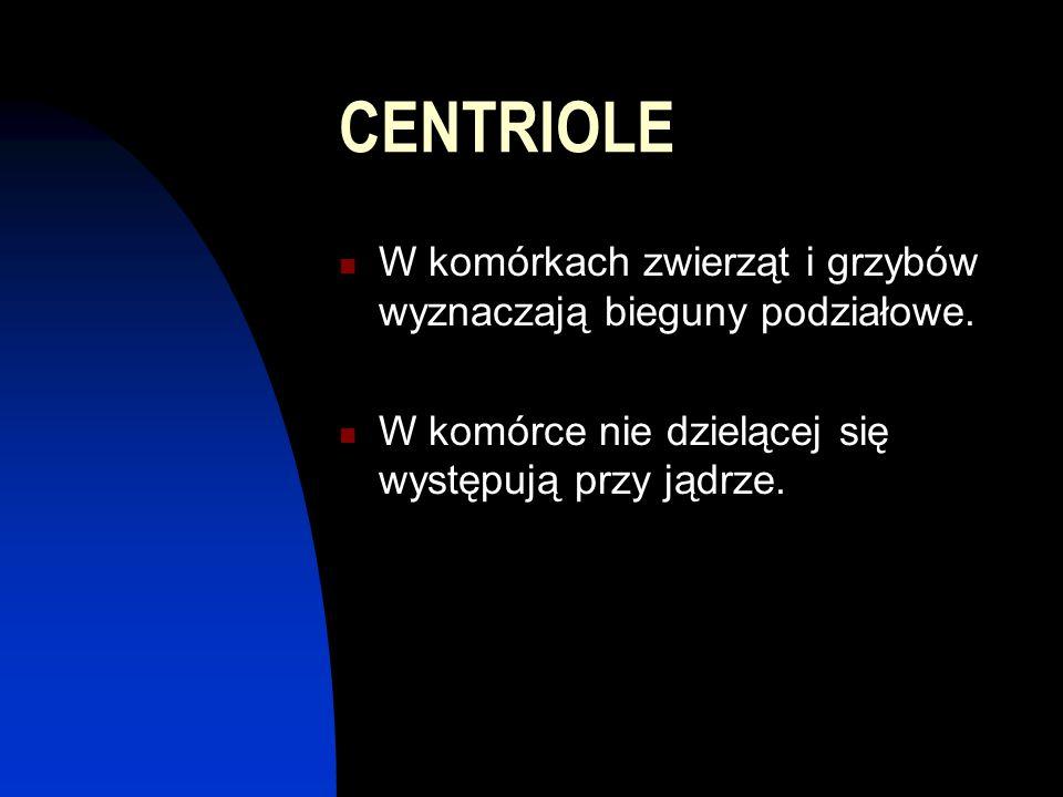 CENTRIOLE W komórkach zwierząt i grzybów wyznaczają bieguny podziałowe. W komórce nie dzielącej się występują przy jądrze.