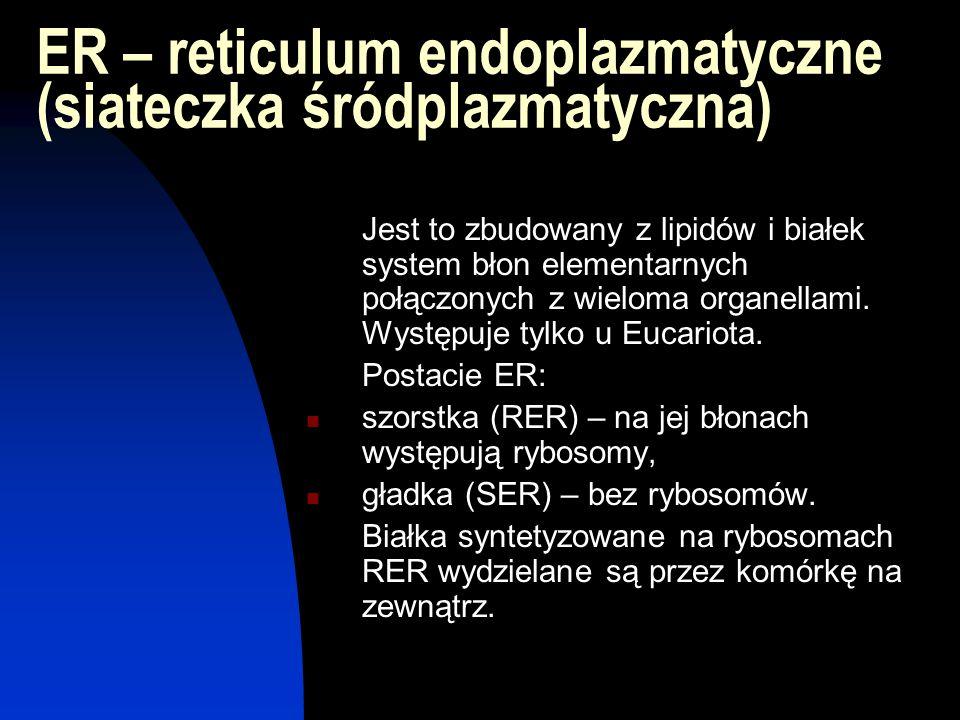 ER – reticulum endoplazmatyczne (siateczka śródplazmatyczna) Jest to zbudowany z lipidów i białek system błon elementarnych połączonych z wieloma orga