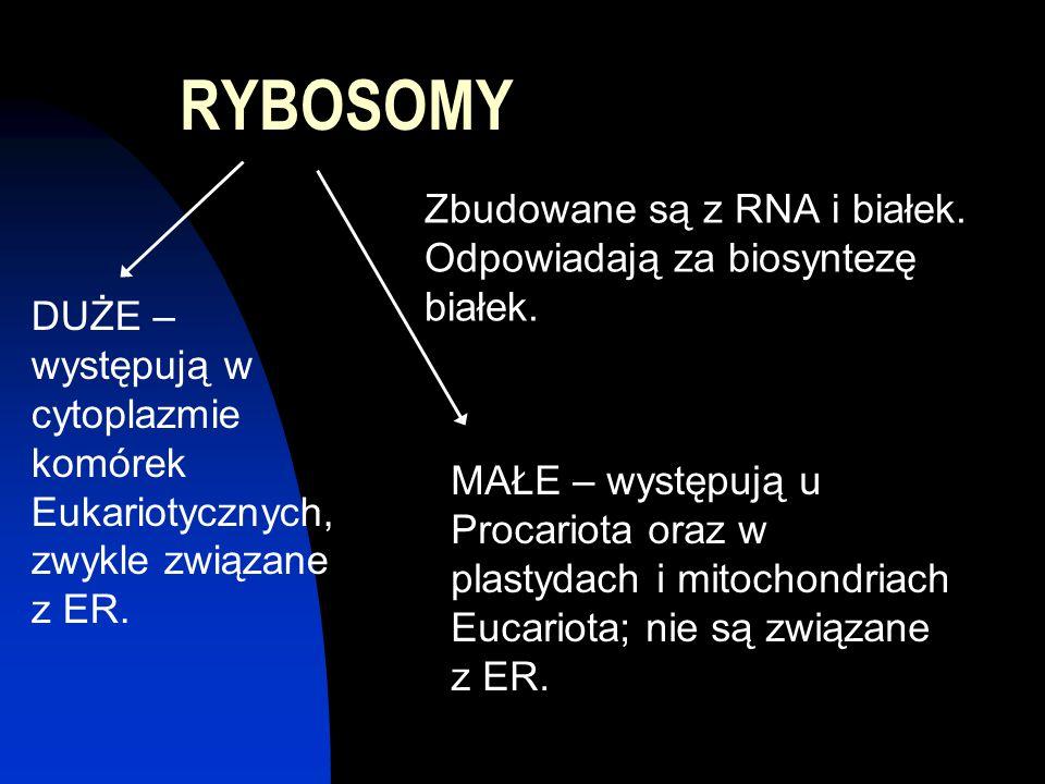RYBOSOMY Zbudowane są z RNA i białek. Odpowiadają za biosyntezę białek. MAŁE – występują u Procariota oraz w plastydach i mitochondriach Eucariota; ni