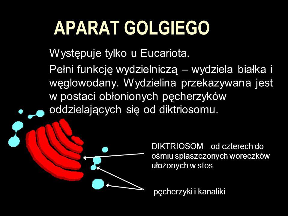 APARAT GOLGIEGO Występuje tylko u Eucariota. Pełni funkcję wydzielniczą – wydziela białka i węglowodany. Wydzielina przekazywana jest w postaci obłoni