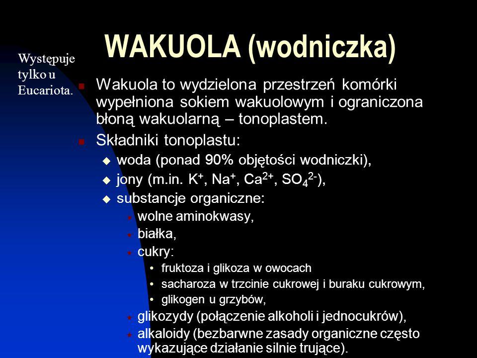 WAKUOLA (wodniczka) Wakuola to wydzielona przestrzeń komórki wypełniona sokiem wakuolowym i ograniczona błoną wakuolarną – tonoplastem. Składniki tono
