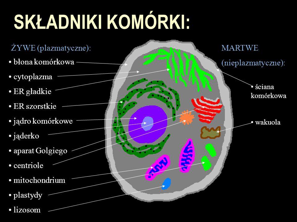SKŁADNIKI KOMÓRKI: ŻYWE (plazmatyczne): błona komórkowa cytoplazma ER gładkie ER szorstkie jądro komórkowe jąderko aparat Golgiego centriole mitochond