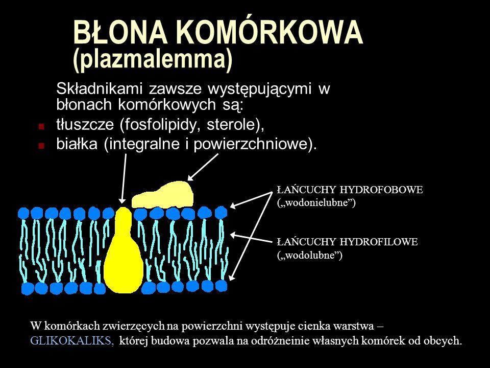 BŁONA KOMÓRKOWA (plazmalemma) Składnikami zawsze występującymi w błonach komórkowych są: tłuszcze (fosfolipidy, sterole), białka (integralne i powierz