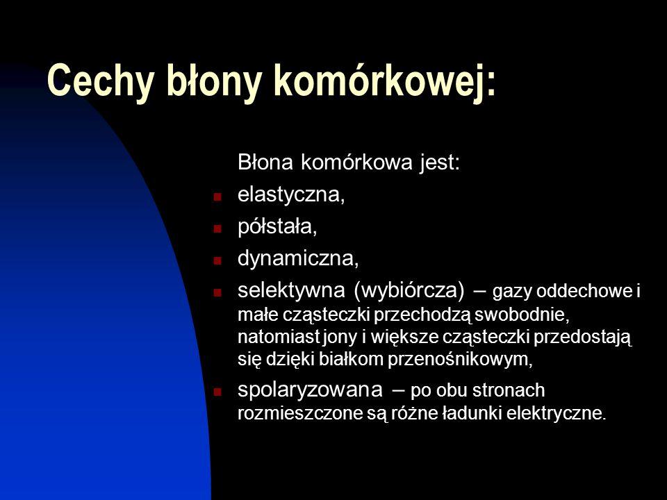 Cechy błony komórkowej: Błona komórkowa jest: elastyczna, półstała, dynamiczna, selektywna (wybiórcza) – gazy oddechowe i małe cząsteczki przechodzą s