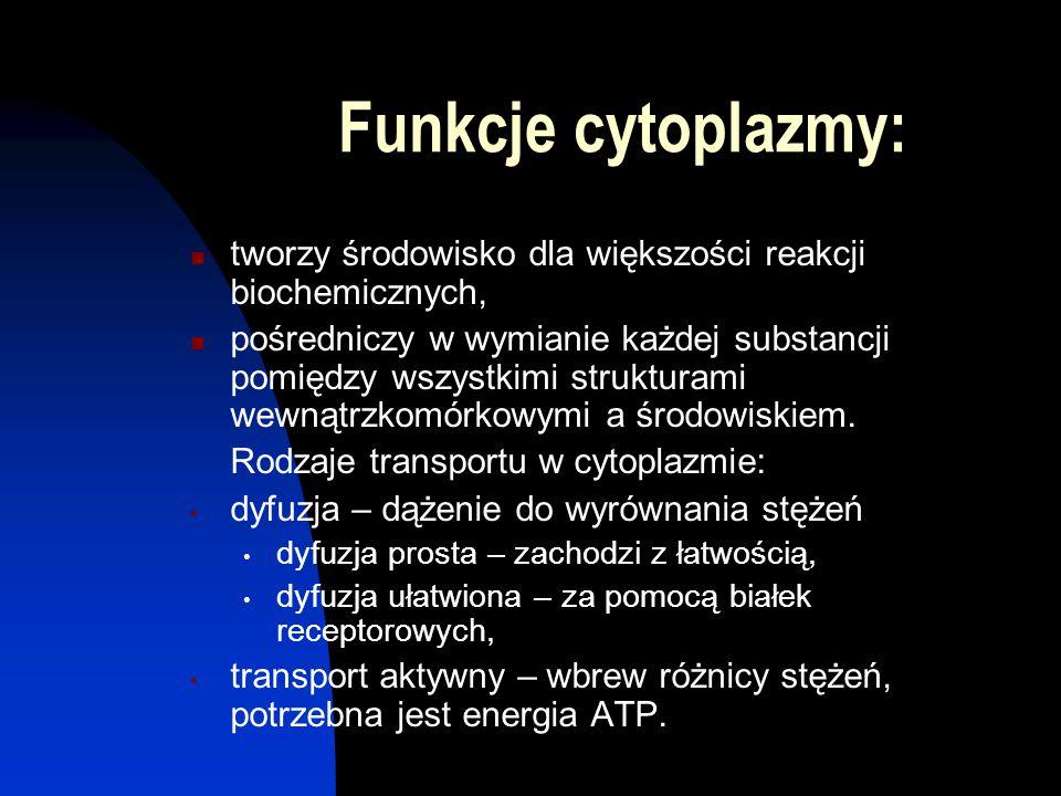 Funkcje cytoplazmy: tworzy środowisko dla większości reakcji biochemicznych, pośredniczy w wymianie każdej substancji pomiędzy wszystkimi strukturami
