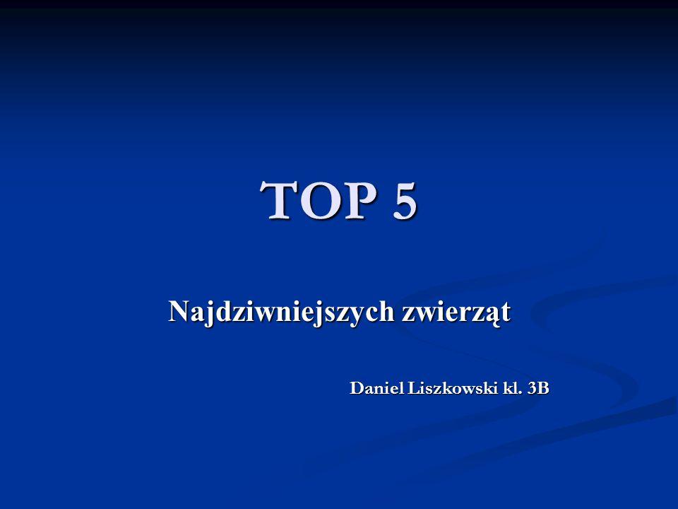 TOP 5 Najdziwniejszych zwierząt Daniel Liszkowski kl. 3B Daniel Liszkowski kl. 3B