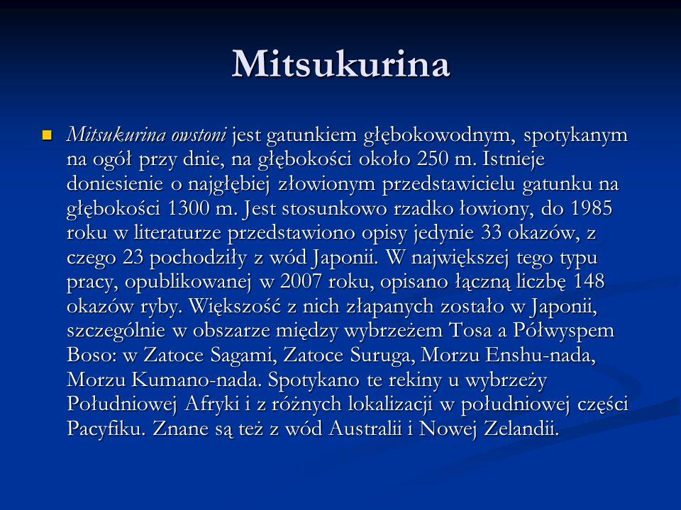Mitsukurina Mitsukurina owstoni jest gatunkiem głębokowodnym, spotykanym na ogół przy dnie, na głębokości około 250 m.