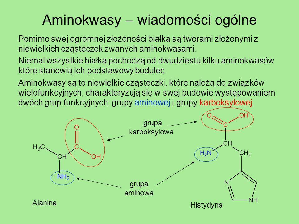 Aminokwasy – wiadomości ogólne Pomimo swej ogromnej złożoności białka są tworami złożonymi z niewielkich cząsteczek zwanych aminokwasami. Niemal wszys