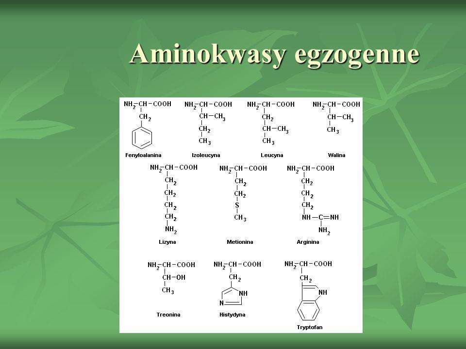 Aminokwasy egzogenne