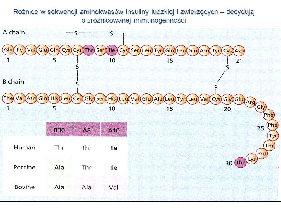 Różnice w sekwencji aminokwasów insuliny ludzkiej i zwierzęcych – decydują o zróżnicowanej immunogenności