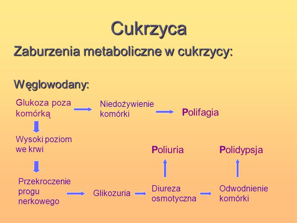 Cukrzyca Zaburzenia metaboliczne w cukrzycy: Węglowodany: Glukoza poza komórką Niedożywienie komórki Wysoki poziom we krwi Przekroczenie progu nerkowe