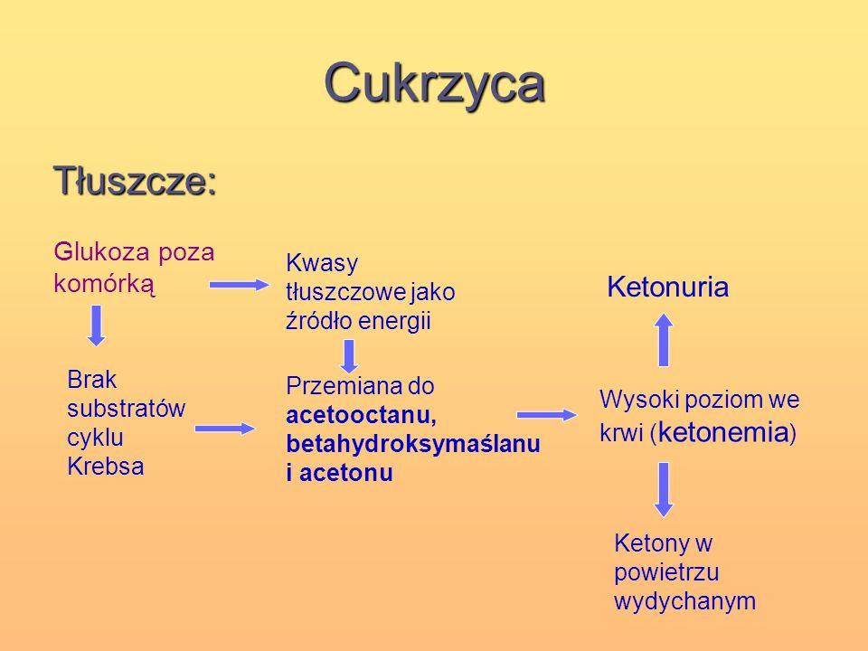 Cukrzyca Tłuszcze: Glukoza poza komórką Kwasy tłuszczowe jako źródło energii Przemiana do acetooctanu, betahydroksymaślanu i acetonu Brak substratów c