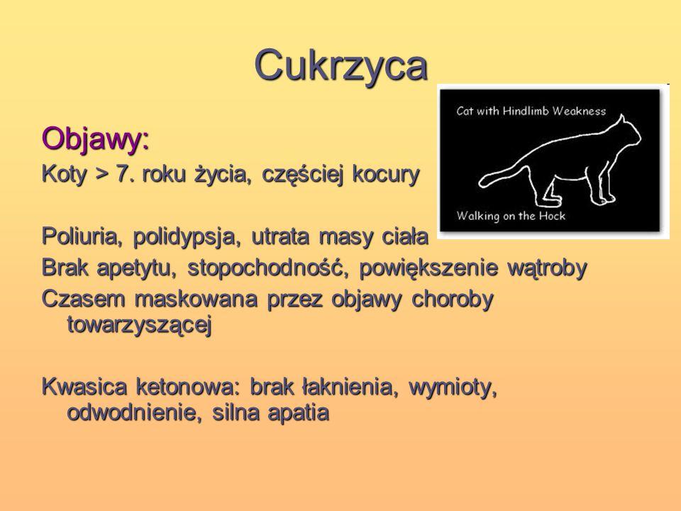 Cukrzyca Objawy: Koty > 7. roku życia, częściej kocury Poliuria, polidypsja, utrata masy ciała Brak apetytu, stopochodność, powiększenie wątroby Czase