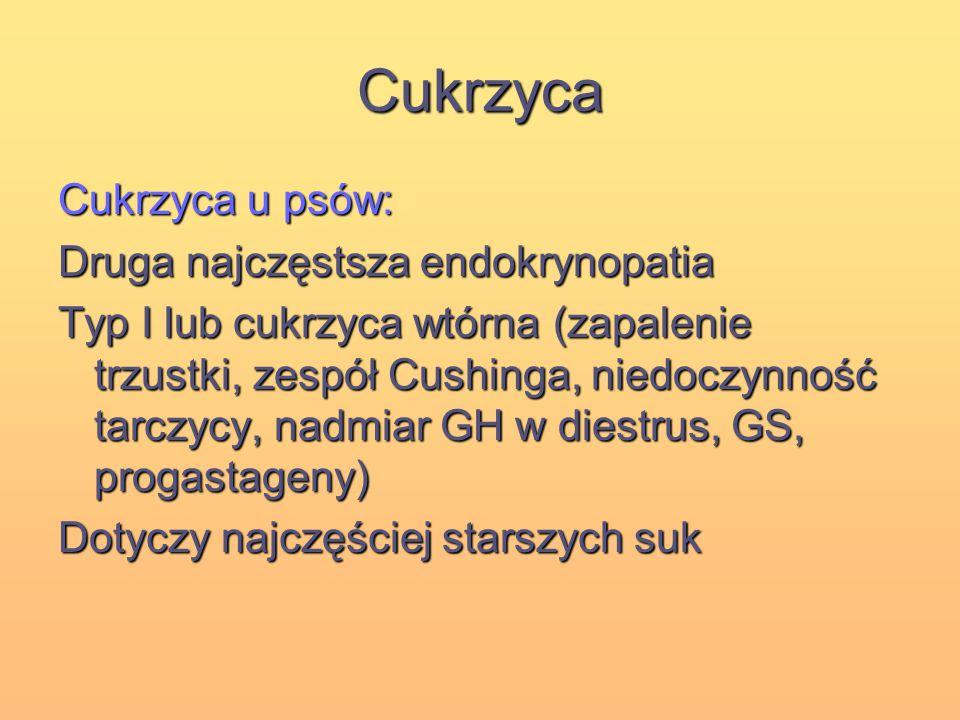 Cukrzyca Cukrzyca u psów: Druga najczęstsza endokrynopatia Typ I lub cukrzyca wtórna (zapalenie trzustki, zespół Cushinga, niedoczynność tarczycy, nad