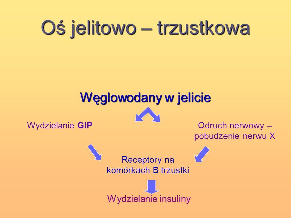 Oś jelitowo – trzustkowa Węglowodany w jelicie Wydzielanie GIPOdruch nerwowy – pobudzenie nerwu X Receptory na komórkach B trzustki Wydzielanie insuli