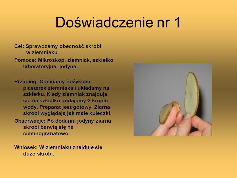 Doświadczenie nr 1 Cel: Sprawdzamy obecność skrobi w ziemniaku Pomoce: Mikroskop, ziemniak, szkiełko laboratoryjne, jodyna. Przebieg: Odcinamy nożykie