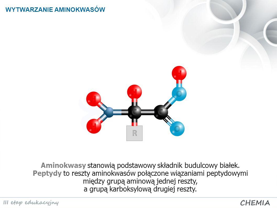 Aminokwasy stanowią podstawowy składnik budulcowy białek. Peptydy to reszty aminokwasów połączone wiązaniami peptydowymi między grupą aminową jednej r