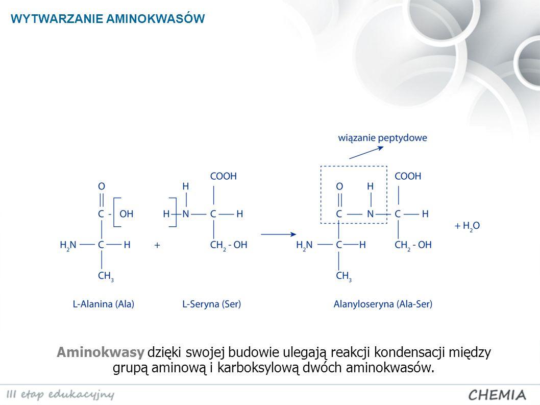 Aminokwasy dzięki swojej budowie ulegają reakcji kondensacji między grupą aminową i karboksylową dwóch aminokwasów. WYTWARZANIE AMINOKWASÓW