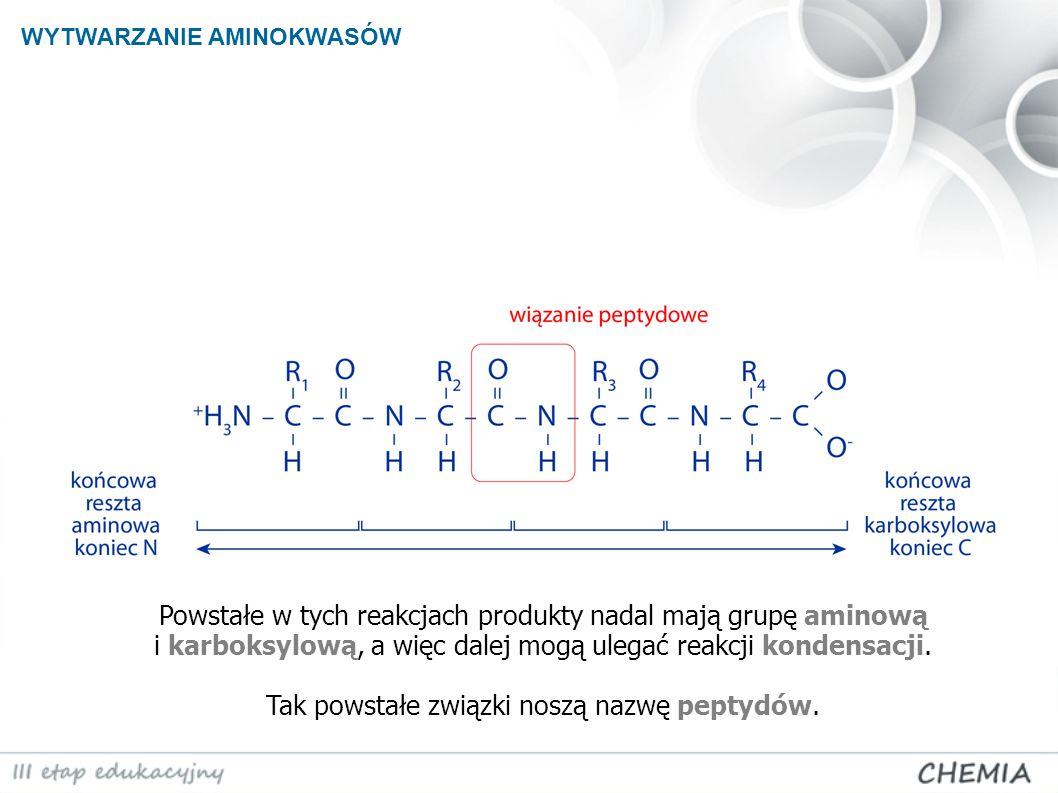 Powstałe w tych reakcjach produkty nadal mają grupę aminową i karboksylową, a więc dalej mogą ulegać reakcji kondensacji. Tak powstałe związki noszą n